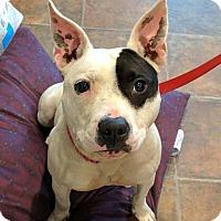 Adopt A Pet :: Gina - Lisbon, OH