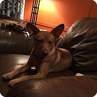 Adopt A Pet :: Tanner - Scranton, PA