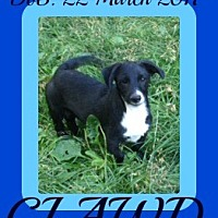 Adopt A Pet :: CLAWD - Jersey City, NJ