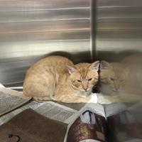 Adopt A Pet :: Pop Rocks - Wausau, WI