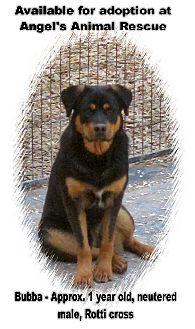 Rottweiler Mix Dog for adoption in Merritt, British Columbia - Ladoix