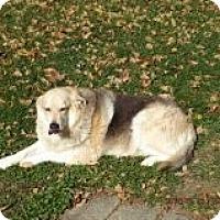 Adopt A Pet :: Rocco - cedar grove, IN