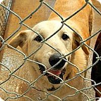 Adopt A Pet :: Sarah - McKinney, TX