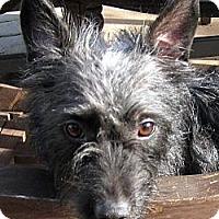 Adopt A Pet :: Dorothy - Oakley, CA