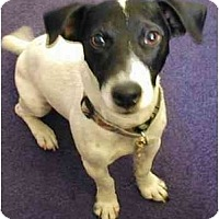 Adopt A Pet :: Houdini - Scottsdale, AZ
