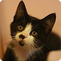 Adopt A Pet :: Mecca - Canoga Park, CA