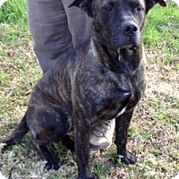 Adopt A Pet :: ANNA/Video available - Leland, MS