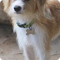 Adopt A Pet :: Quinn - MEET ME - Norwalk, CT