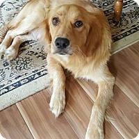 Adopt A Pet :: Chloe - Murrells Inlet, SC