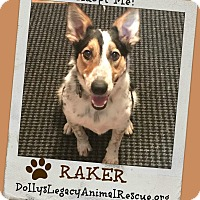 Adopt A Pet :: RAKER - Lincoln, NE
