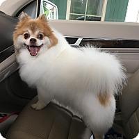 Adopt A Pet :: Buddie - Alpharetta, GA