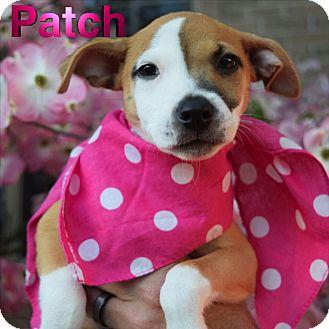 Terrier (Unknown Type, Medium) Mix Puppy for adoption in Washington, Pennsylvania - Patch