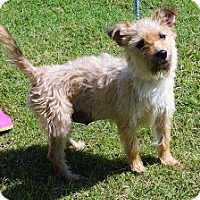 Adopt A Pet :: Lolly - Brunswick, ME
