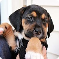 Adopt A Pet :: Jasmine - Youngsville, NC