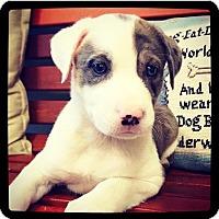 Adopt A Pet :: Masie - Grand Bay, AL