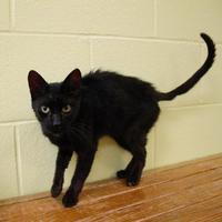 Adopt A Pet :: Duffy - Green Bay, WI