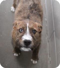 Terrier (Unknown Type, Medium) Mix Dog for adoption in Philadelphia, Pennsylvania - Ruby