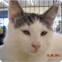 Adopt A Pet :: Cody - Riverside, RI