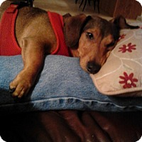 Adopt A Pet :: Rocky - Beachwood, OH