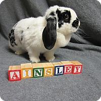 Adopt A Pet :: Ainsley - Newport, DE