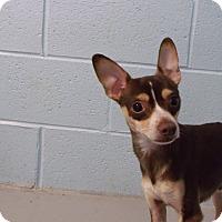 Adopt A Pet :: Mario - Muskegon, MI