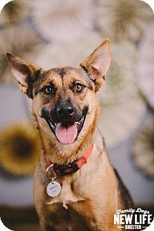 German Shepherd Dog/Belgian Malinois Mix Dog for adoption in Portland, Oregon - Louise