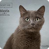 Adopt A Pet :: Mavis - Phoenix, AZ