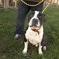 Adopt A Pet :: True - Zaleski, OH