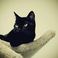 Adopt A Pet :: Biscuit - Milwaukee, WI