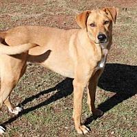 Adopt A Pet :: REN - Edmond, OK