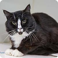 Adopt A Pet :: Tuxie - Merrifield, VA
