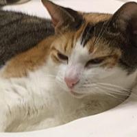 Adopt A Pet :: Cleo - Brownsboro, AL