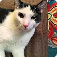 Adopt A Pet :: Panda - Duluth, GA