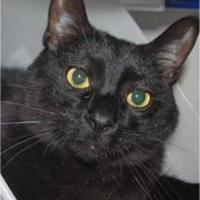 Adopt A Pet :: Charlie - Waupaca, WI