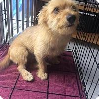 Adopt A Pet :: Sasha - Boca Raton, FL