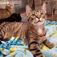Adopt A Pet :: Scooter - Fairbury, NE
