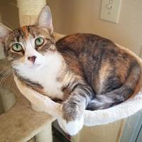 Adopt A Pet :: Sparkle - Fredericksburg, TX