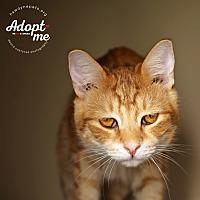 Adopt A Pet :: Nick - Lyons, NY