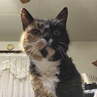 Adopt A Pet :: Susie Q - Phillipsburg, NJ