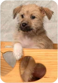 Terrier (Unknown Type, Medium) Mix Puppy for adoption in Deer Park, Texas - Doc