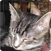 Adopt A Pet :: Ryan (DH) - Little Falls, NJ