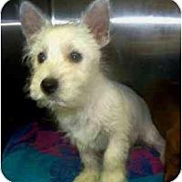 Adopt A Pet :: Willy - Dayton, OH