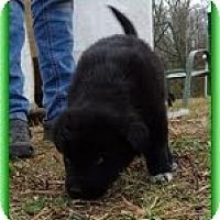 Adopt A Pet :: Lynxie - Staunton, VA