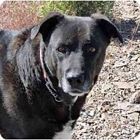 Adopt A Pet :: Apple - YERINGTON, NV