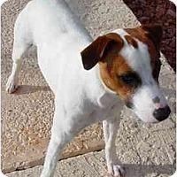Adopt A Pet :: Buddy II - Scottsdale, AZ