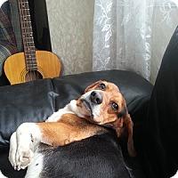Adopt A Pet :: Kip - Hamilton, ON