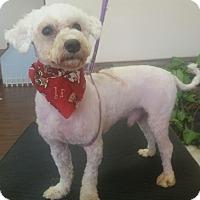 Adopt A Pet :: Ollie - Garwood, NJ