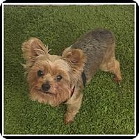 Adopt A Pet :: Remi - Indian Trail, NC