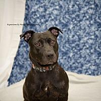 Adopt A Pet :: Toni - Marlton, NJ