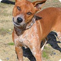 Adopt A Pet :: Raiden D3670 - Shakopee, MN